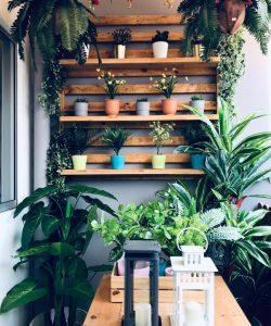 Camila, Mini Garden